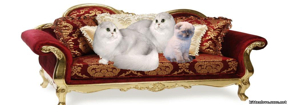 диванчик маленький для котят фотосессии, диван для кукол