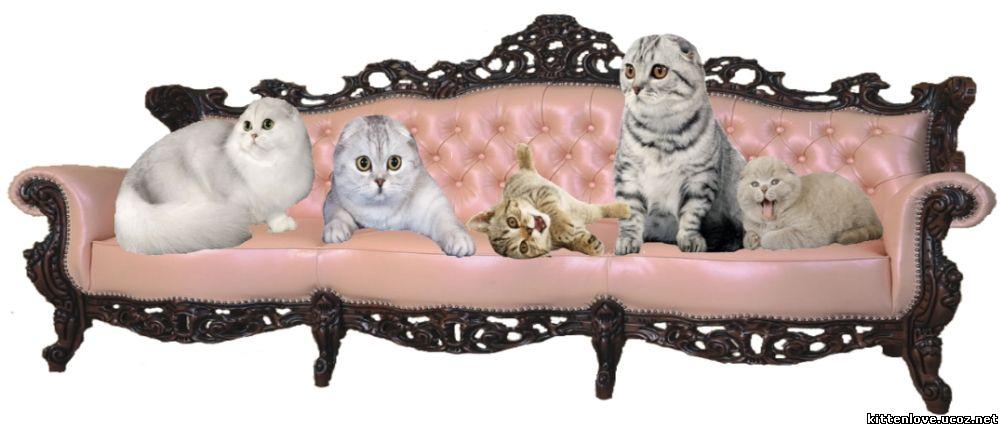 диванчик для кошки собачки доставка
